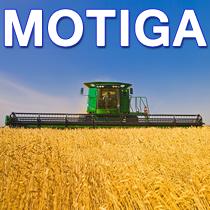 Мотига
